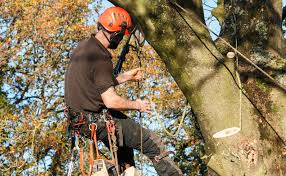 SERVICES M&T Friendly Tree -Tree Removal-Stump Removal-Emergency ...