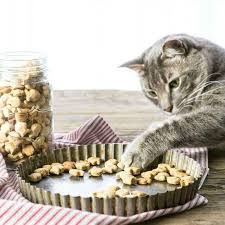 homemade cat treats recipe 3