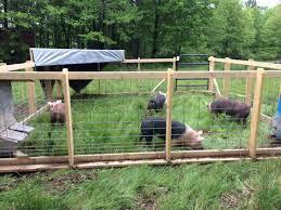 Hog Tractor Pig Farming Pig Fence Hog Farm
