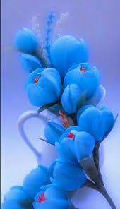 صور خلفيات ورد اجمل تشكيلة لخلفيات الورود استخدمها لهاتفك هل