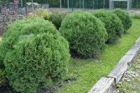 calgary carpet juniper