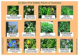 12 best edible wild plants of australia