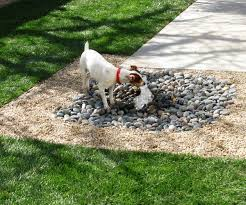 8 Great Backyard Ideas To Delight Your Dog The Bark