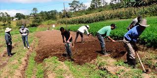 Más de 5 mil productores beneficiados con el Programa de Desarrollo  Agrícola - Diario La Tribuna
