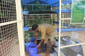 aquaponics in kerala malayalam aquaponic
