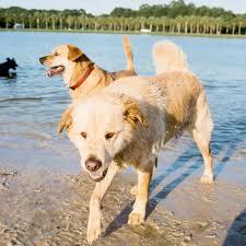 Off Leash Dog Parks Charleston Sc Charleston Magazine