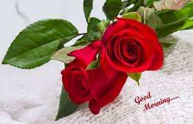 gm wallpaper and gud morning