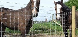 Farm Fence Field Fence Deer Wire Mesh Chinafencewiremesh Com
