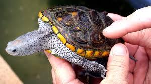Turtle Pond Design The Pond Digger