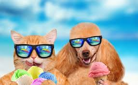 Cats and dogs are headed to the beach this Saturday for ...
