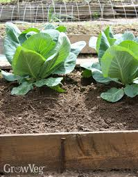 how to create a vegetable garden on a slope
