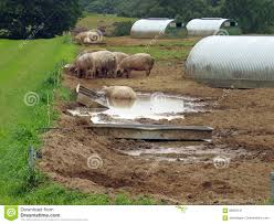 8 Electric Fence Pig Photos Free Royalty Free Stock Photos From Dreamstime