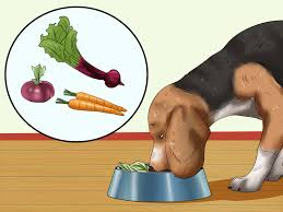 treat dog worms with food and herbs