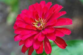 Poze : peisaj, natură, inflori, păpădie, floare, petală, arc, roz ...
