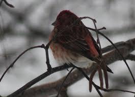 Abby Bell - BirdWatching