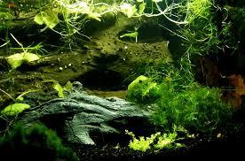 13 por types of aquarium algae