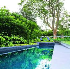Screening Plants Creating Your Outdoor Sanctuary Completehome