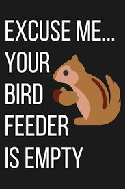 Excuse Me Your Bird Feeder Is Empty: Funny Squirrel Notebook: For ...