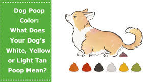dog color what does your dog s