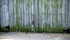 dog out of my yard effective methods