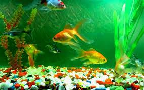 moving fish wallpaper 2560x1600