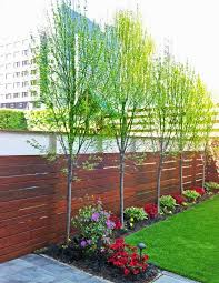 trees that can grow along a fence line
