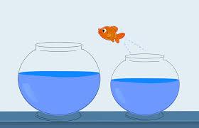 Free Images : fish, jump, change, career, concept, challenge ...