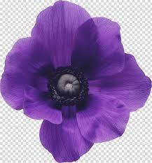 باقة ورد بنفسجي بنفسجي أزرق زهرة الأرجواني والأزرق والبنفسجي