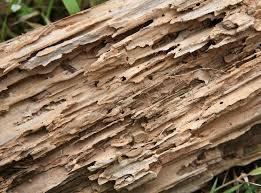 Get Termite Wood Repair Background