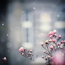 fiorimo® online cicek servisi fiorimo flowers istanbul bloom