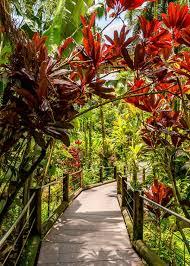 hawaii tropical botanical garden big