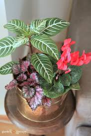 houseplants that are poisonous to pets