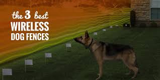 3 Best Wireless Dog Fences Petsafe M Tronic And Pif 300 Reviews