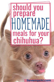 homemade meals for your chihuahua