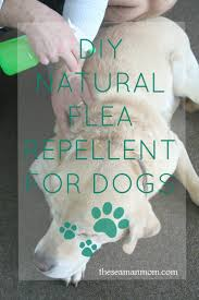 natural flea for dogs with