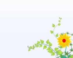 خلفيات بور بوينت جديدة وجميلة عالية الدقة 2020 Flowers