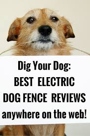 The Best Electric Dog Fence Reviews Anywhere Dig Your Dog