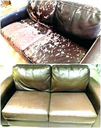 faux leather sofa and cats easy craft