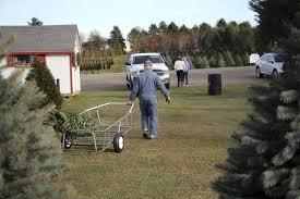 No Christmas tree shortage here - Huron Daily Tribune