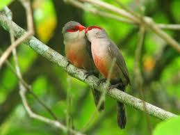 Je t'aime mon petit oiseau des iles !
