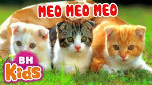 Meo Meo Meo ♫ Chú Mèo kêu meo meo ♫ Nhạc Thiếu Nhi Cho Bé - YouTube