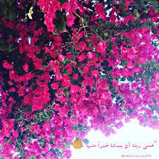 اقتباسات أخضر ورد ربيع صورة من القلب تصويري غزة Red
