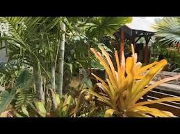 tropical garden nursery brisbane