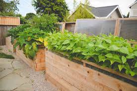 tall raised beds with coldframes