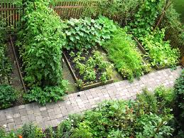 skippy s vegetable garden vegetable garden
