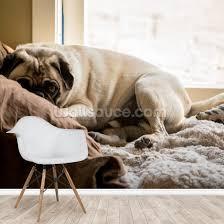 cozy pug wallpaper wallsauce eu