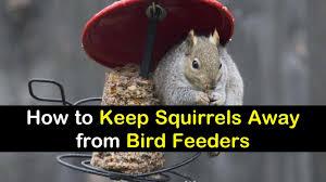 keep squirrels away from bird feeders