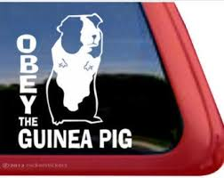 Guinea Pig Car Decal Etsy