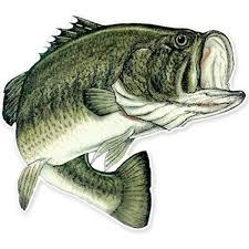 Amazon Com Ak Wall Art Largemouth Bass Fishing Fish Vinyl Sticker Car Window Bumper Laptop Select Size Home Kitchen
