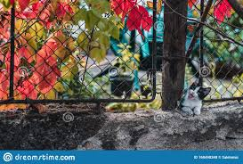 Funny Looking Cat Outdoor In Autumn Stock Photo Image Of Fence Wall 160498348